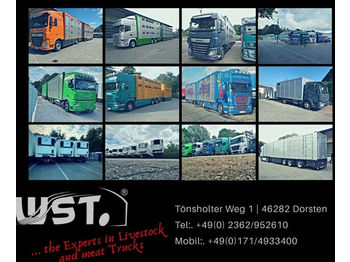 MAN TGX 26.480 XL Menke   3 Stock Vollalu Hubdach  - djurtransport lastbil
